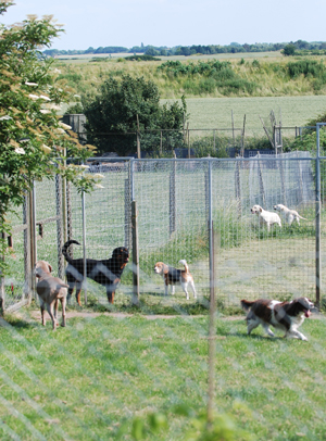 Our dogs have plenty of exercise in the extensive paddocks