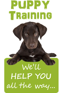 Give your puppy the best start in life and enrol in our puppy classes